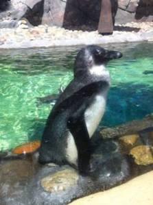 Penguin_n